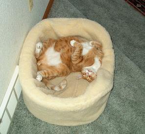 Bailey relaxing in his bed