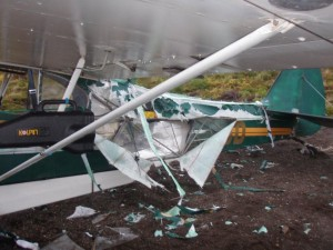 bear damaged plane